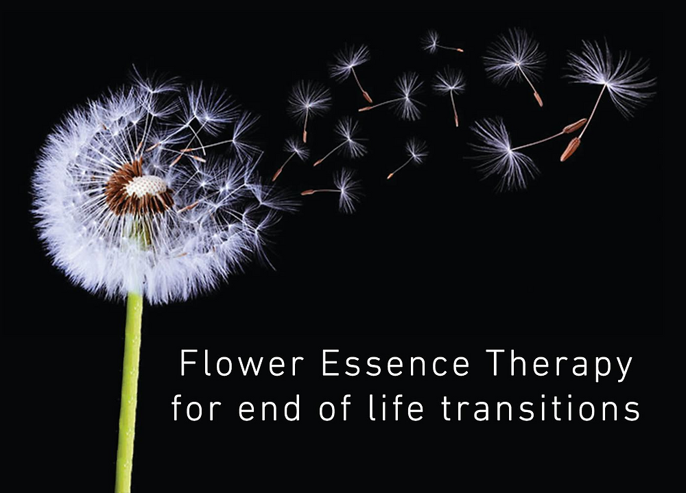Bach flower essence therapy for elders and end of life care