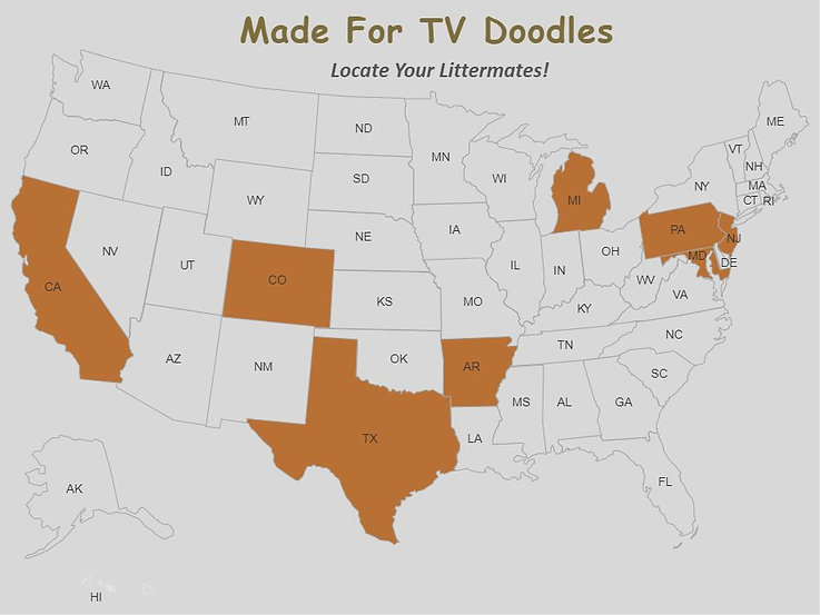 Made For TV Doodles Feb 2021 MAP.jpg