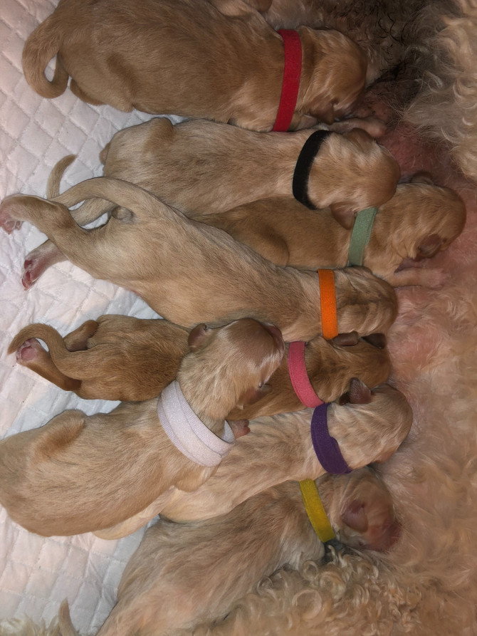"HAPPY BIRTHDAY! The ""Saved by the Bell"" Litter has arrived!"