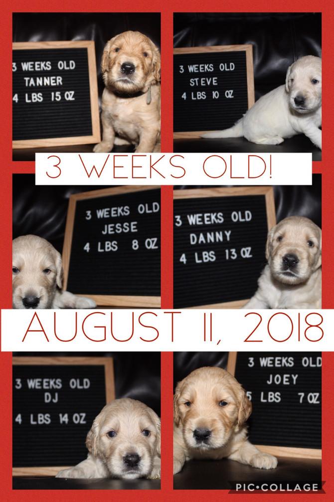 We turned 3 weeks old on Saturday!