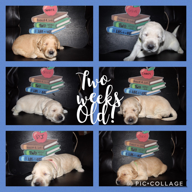 TWO weeks old!