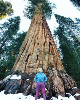 January 30, 2018   Sequoia National Park