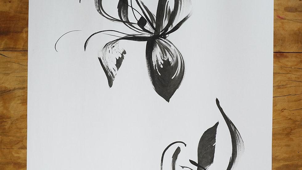 Iris I - Neomarica candida  (superior)