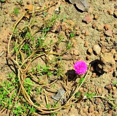 Flower16.jpg
