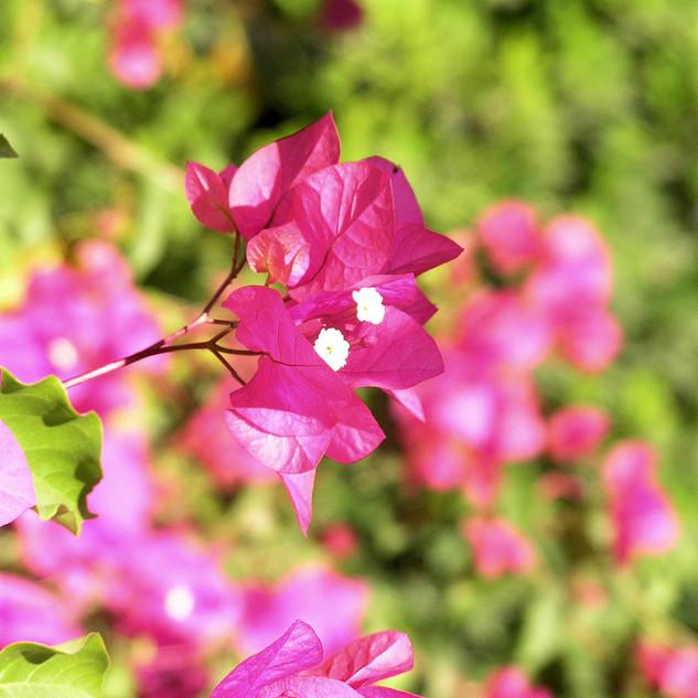 Flower39.jpg