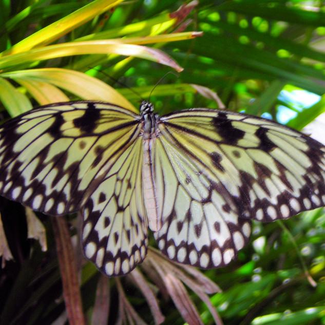 Butterfly12.jpg