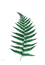 fern leaf placeholder.png