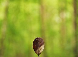 atelier_developpement_personnel_coaching_coach_bien_etre_mieux_etre_ameliorer_soi_confiance_estime_meditation_mediter_relaxation_www.kinitro.fr_