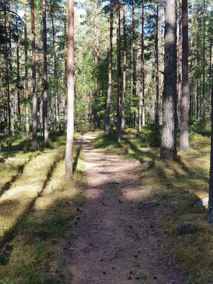 Skogen ger energi