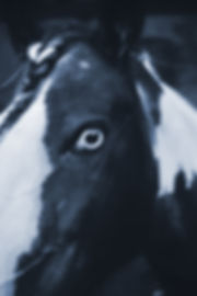 pferdeauge_klein.jpg