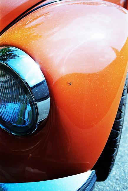 orangener_käfer_klein.jpg