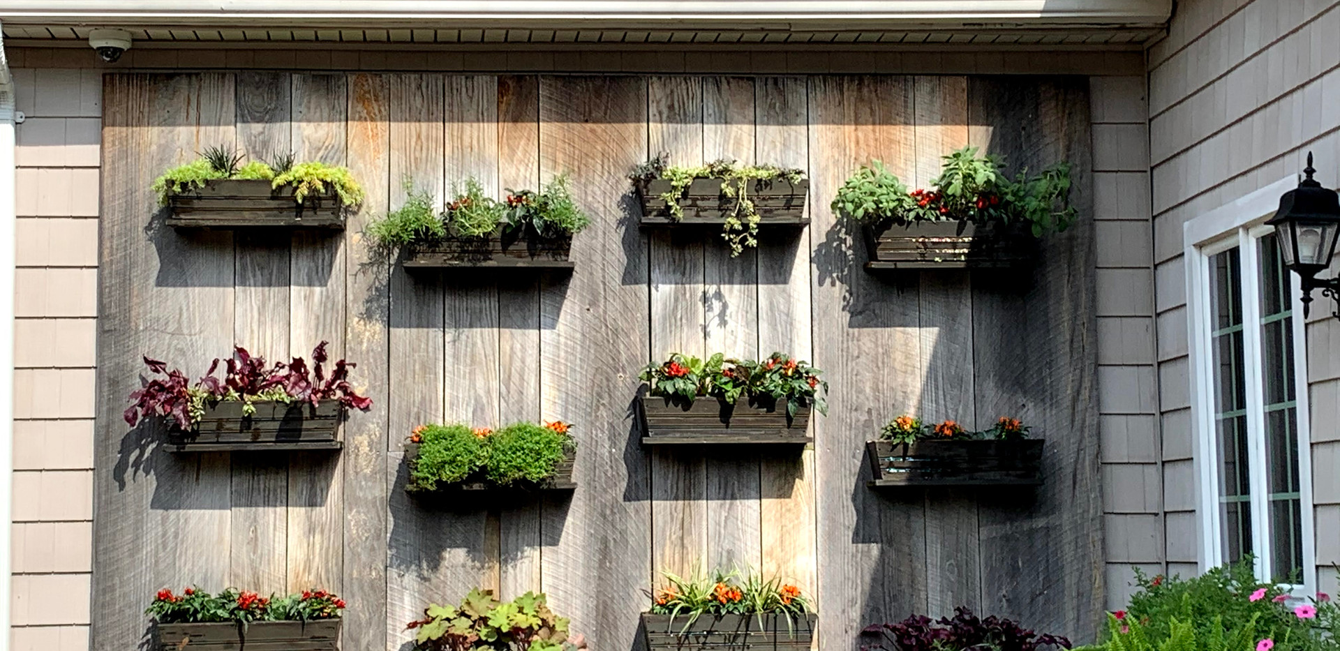 Live Herb Wall at a Restaurant