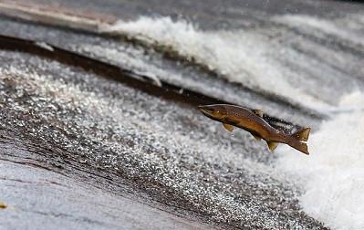 электронная вет сертификация рыбы
