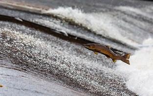 Принят ГОСТ по облучению рыбы и морепродуктов