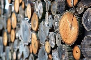 Стандартизация и метрология в поддержку развития предприятий лесного машиностроения