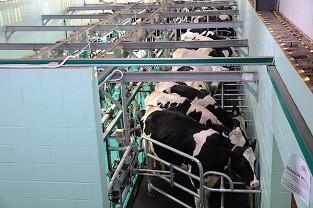 «ВЕМА» предлагает доработать техрегламент «О безопасности молока и молочной продукции»