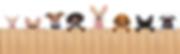 Blog-Banner-Image-1000x300-Arapahoe-Libr