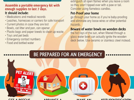 Fire Safety Awareness for Pets!!