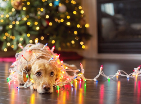 Holiday Dangers and things to consider with your Pets.