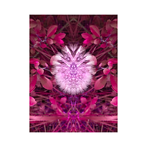 Art numérique - Série Coro - Isabelle Damsaint