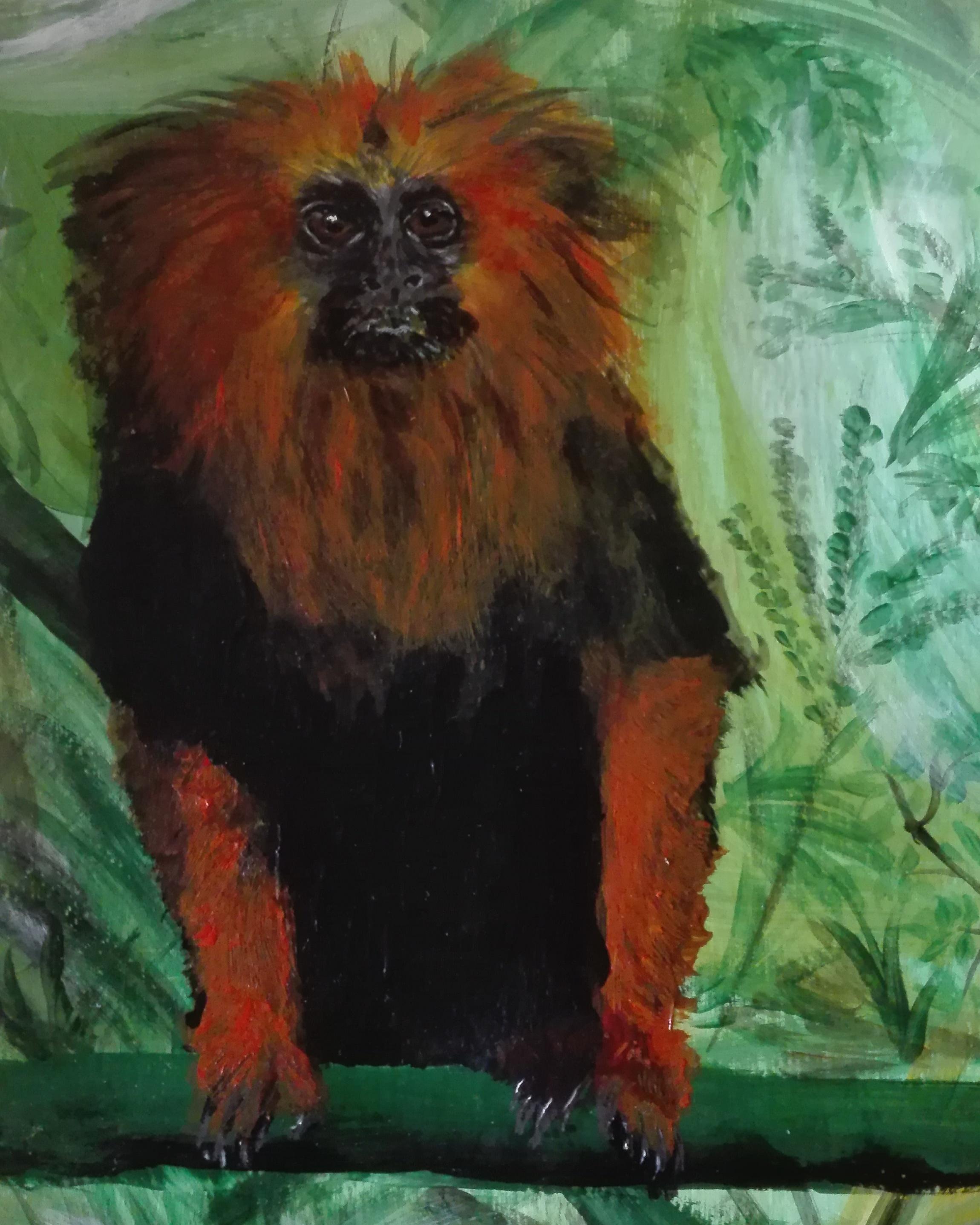 leeuwenaapje