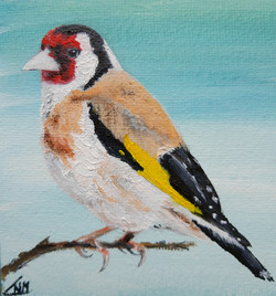 puttertje, goldfinch