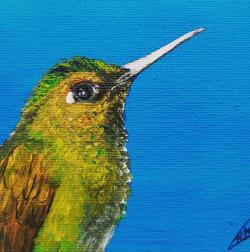 olieverf kolibrie