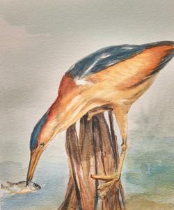 Aquarel Heron