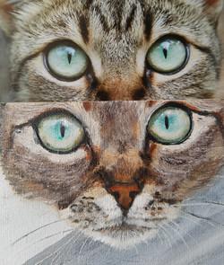 cat. kat