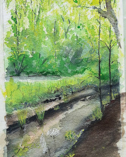 aquarel slootje in bos