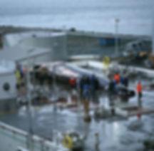 sea le-at-whaling-station.jpg