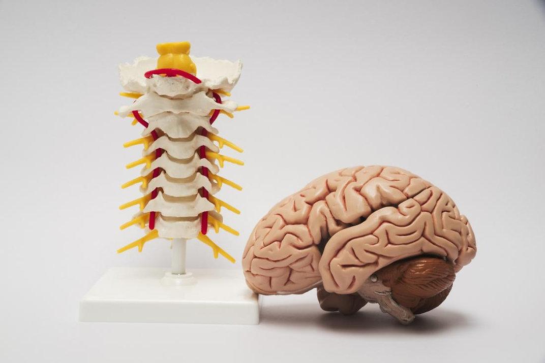 central-nervous-system.jpg