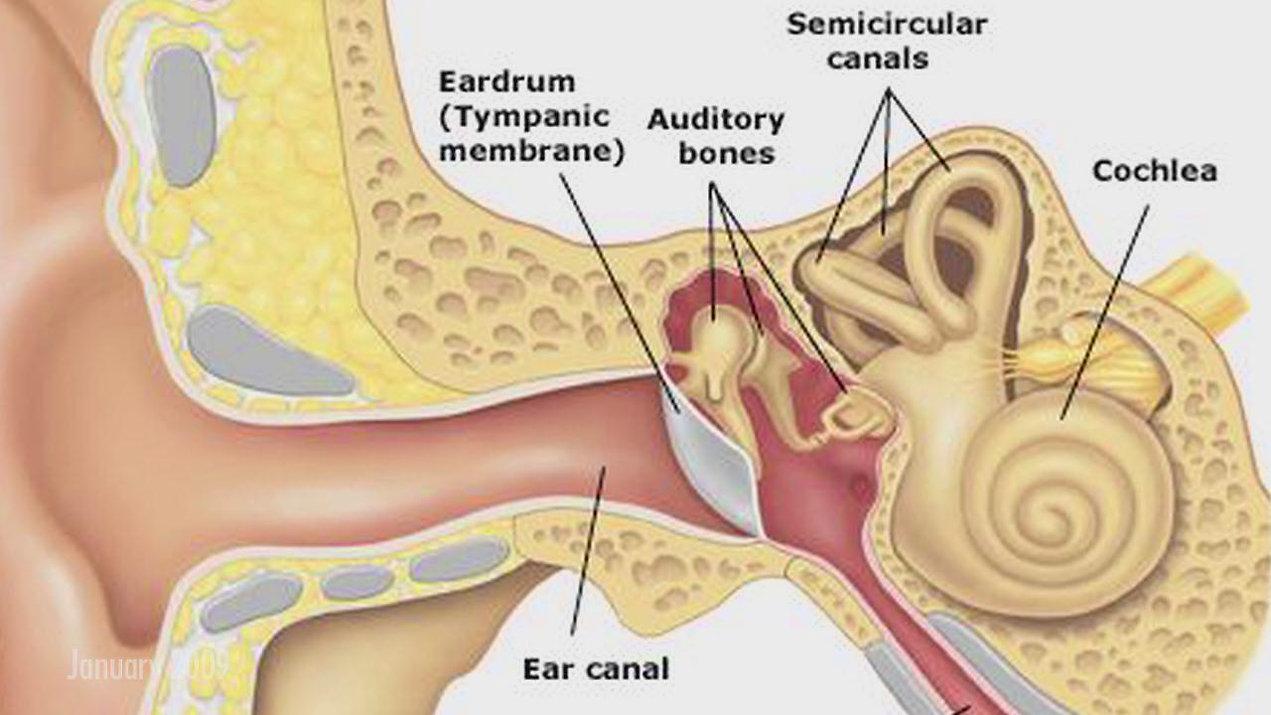 functions-of-eardrum.jpg