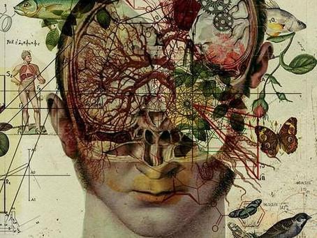 (Part 2) NEUROLOGICAL CODING ERRORS & EPILEPSY- EVOLVING INDIVIDUAL INTERPRETATION OF NEUROLOGY
