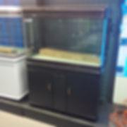 Cheap fish tanks
