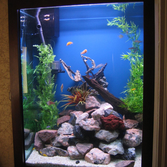In Wall Custom Aquarium