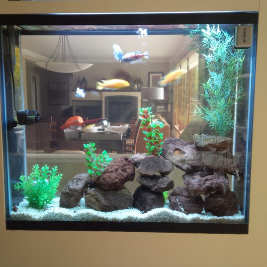 Custom Freshwater Wall Aquarium