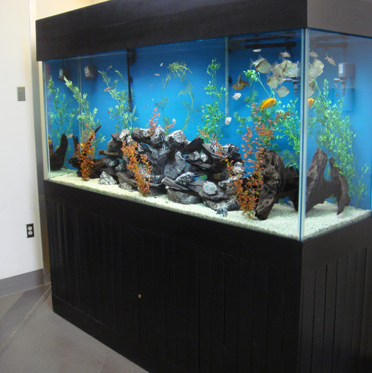 Large Custom Freshwater Aquarium