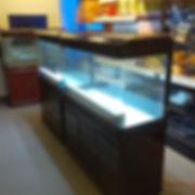 cheap aquariums toronto