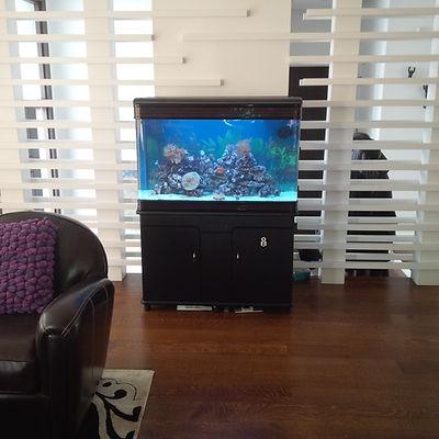 Aquarium lease toronto