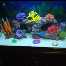 Artifical Corals