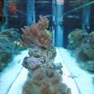 Custom Reef Tank Toronto