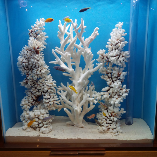 White Aquarium Decorations