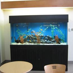 Custom Wood Aquarium Cabinets