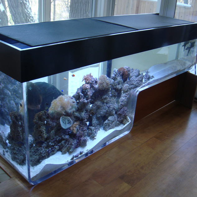 Custom Curved Acylic Aquarium