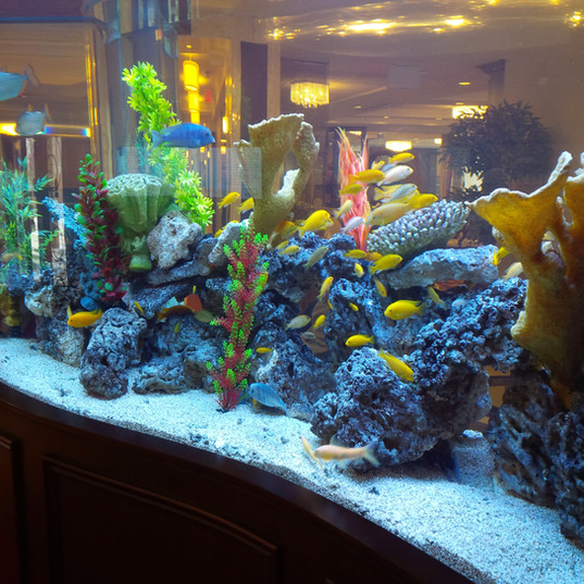 Custom Aquarium Decor Toronto