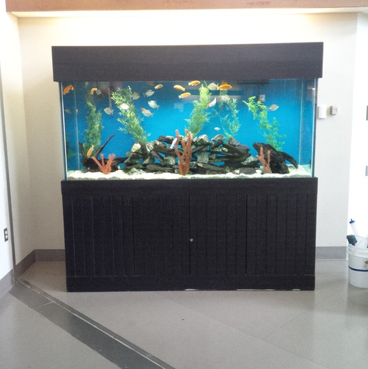 Aquarium Service Pickering