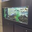 African Cichlid Aquarium