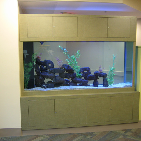 Aquarium Service Scarborough