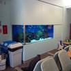 Aquarium Service Whitby
